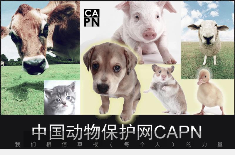 中国动物保护网CAPN——我们相信草根(每个人)的力量